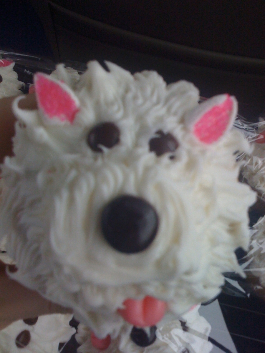 Westie Puppy Cupcakes on Cake Central