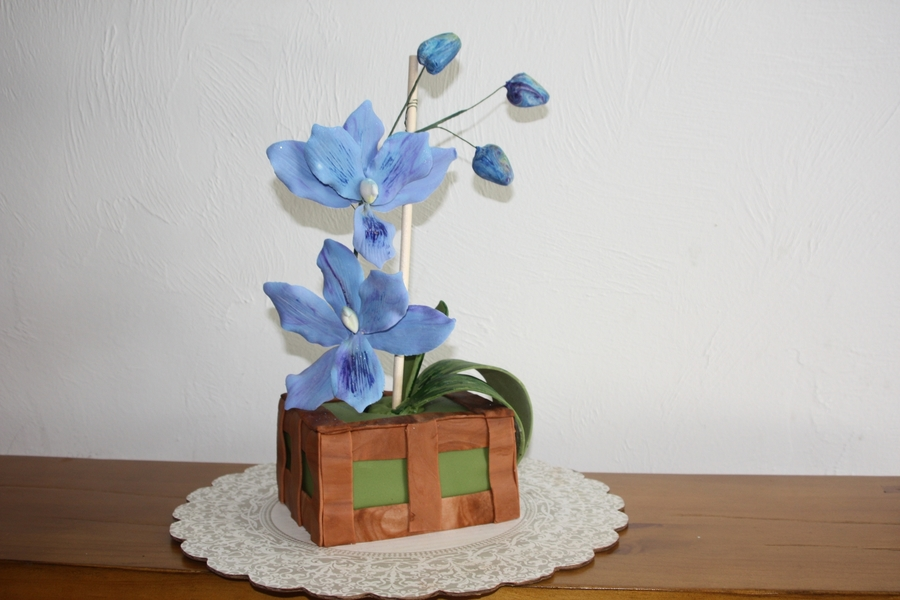 Blue Orchid Cake on Cake Central