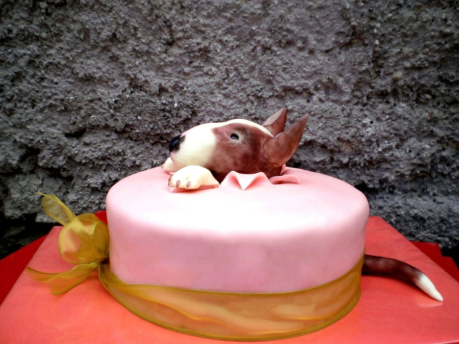 Pitbull Birthday Cake
