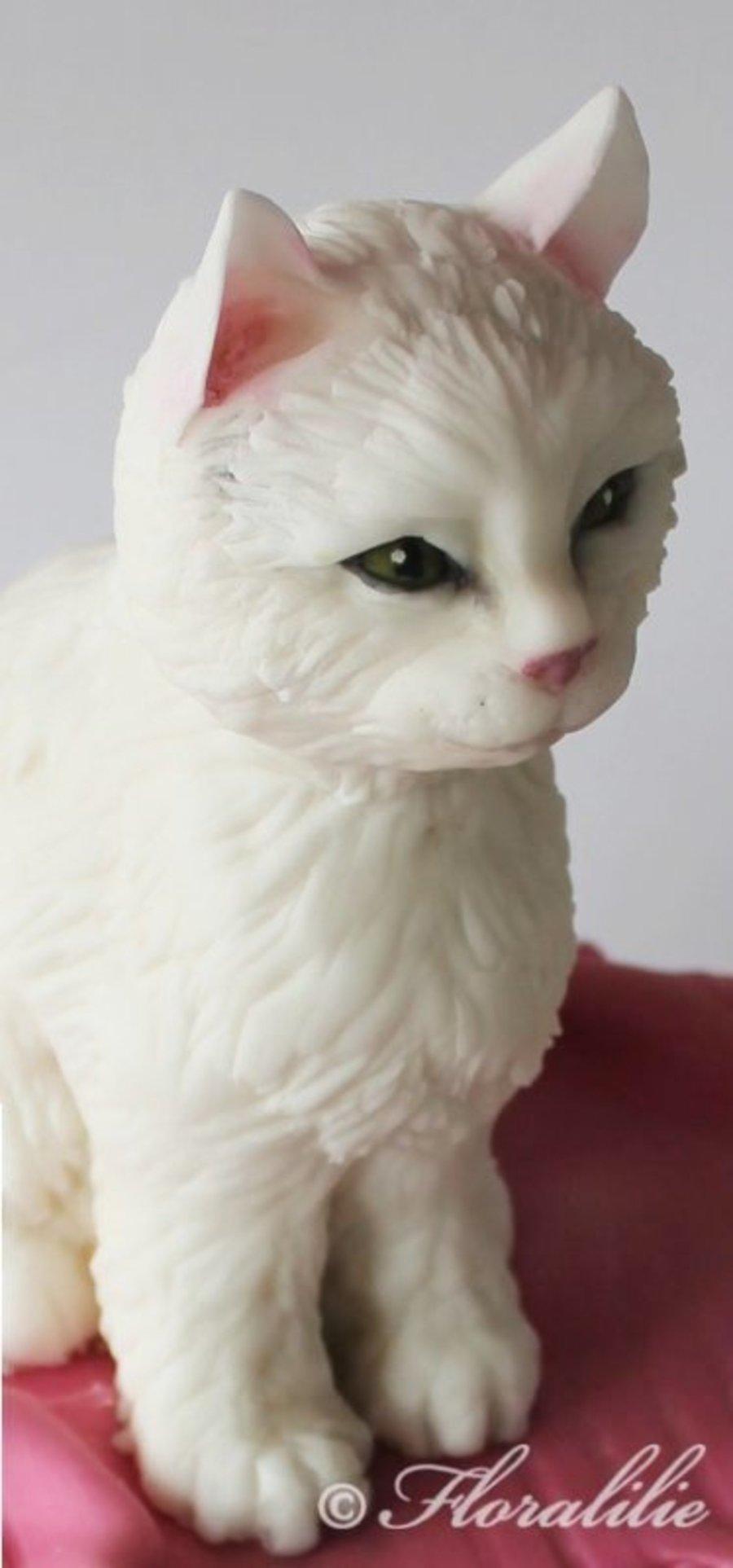 Cat Cakes Pinterest