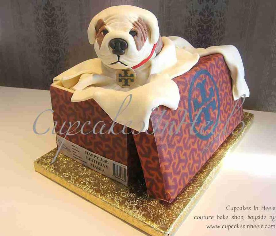 Miniature Bulldog Sitting In Tory Burch Shoe Box on Cake Central