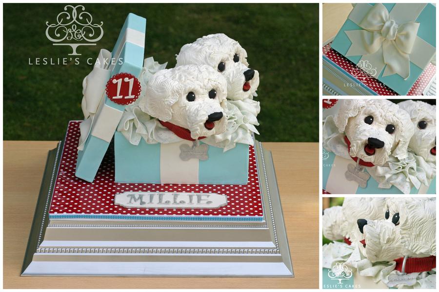 Maltese Terrier Dogs Gift Box Cake Cakecentral Com