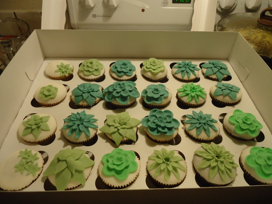 Succulent Cupcakes on Cake Central