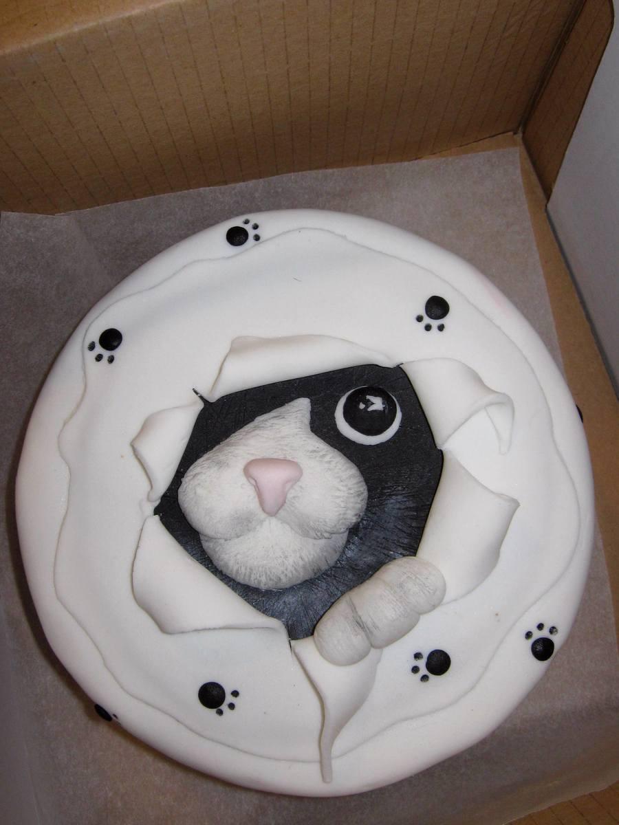 Cat CakeCentralcom