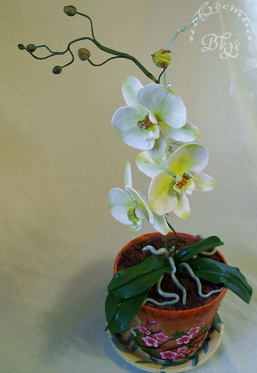 Cake Orchid In A Clay Pot on Cake Central