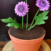 Gerber-T Daisies/ Terra Cotta Pot Cake. This is the cake I made for a special lady celebrating her birthday. The daisies I made from gum paste.