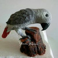 African Gray african grey in gumpaste!