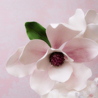 Beauty White magnolia