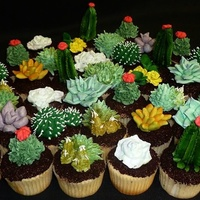 "Succulent Cupcakes Variety of sculpted and piped succulents on chocolate ""dirt"" cupcakes"