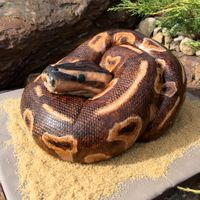 "Snake! carved from one 9x13 cake & one 8""roundhand painted"