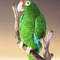 Puerto Rican Parrot I'm so happy to be part of this amazing project for endangered animal awareness… Each artist chose an endangered...