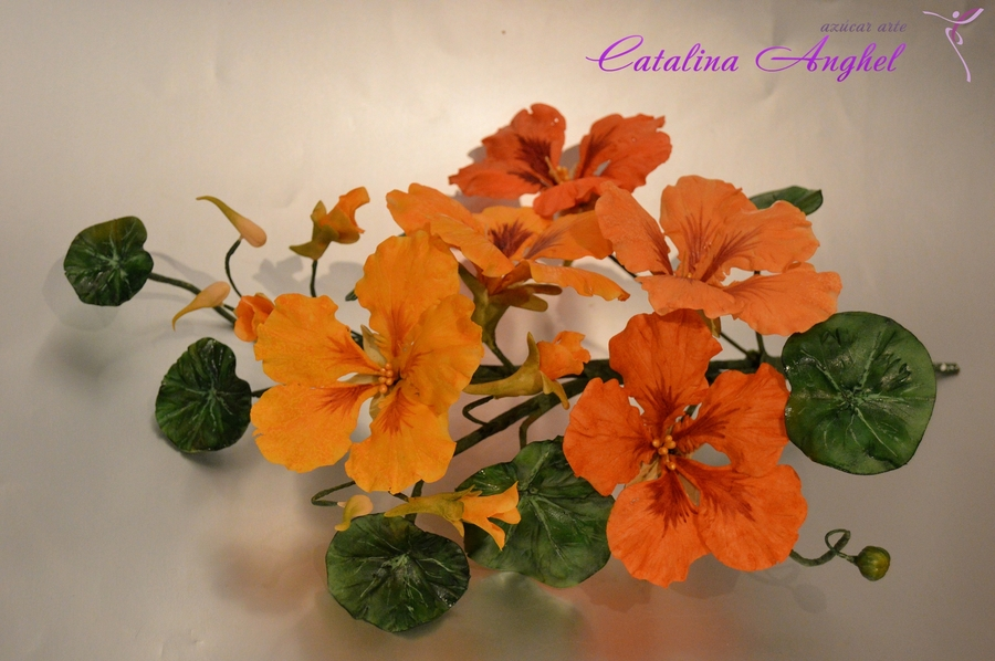 Sugar Flower Free Formed- Nasturtium on Cake Central