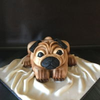 Little Pug My son wanted a pug for his birthday so I baked one