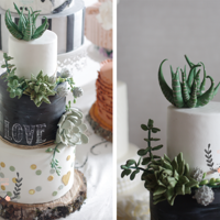 Succulent Cake Succulent wedding cake https://www.facebook.com/delicatesse.cake.design
