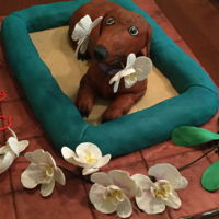 Birthday Dachshund With Orchids This cake is for a friend's father who is obsessed about his dog Gigi and has orchids as a hobby. Tile is fondant on a foam core board...