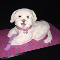 Noel Puppy Cake Made for my mom to look like her dog and she loved it! TFL!