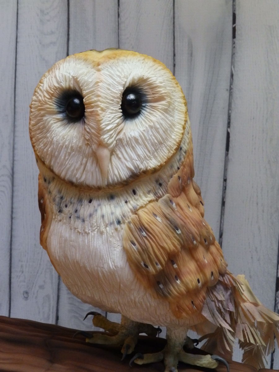 Barn Owl On Log Cakecentral Com