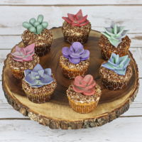 Cupcakes Cute cupcakes with modeling chocolate succulents.