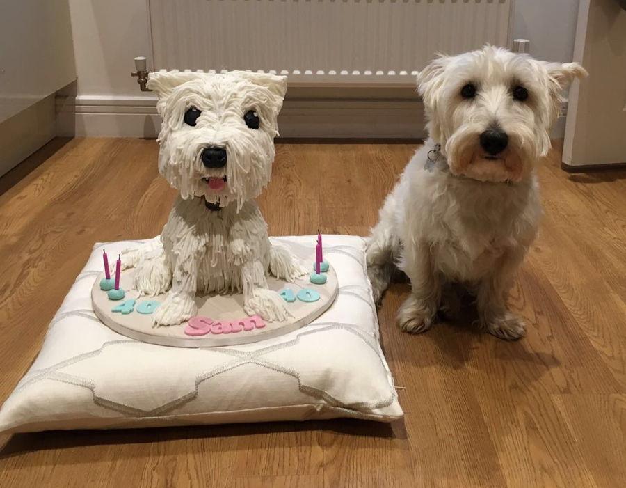 Westie Dog Cake Cakecentral Com