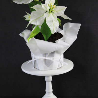 White Poinsettia Cake