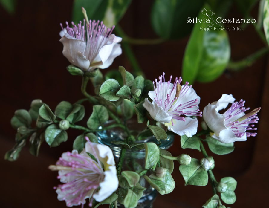 Caper Flowers on Cake Central