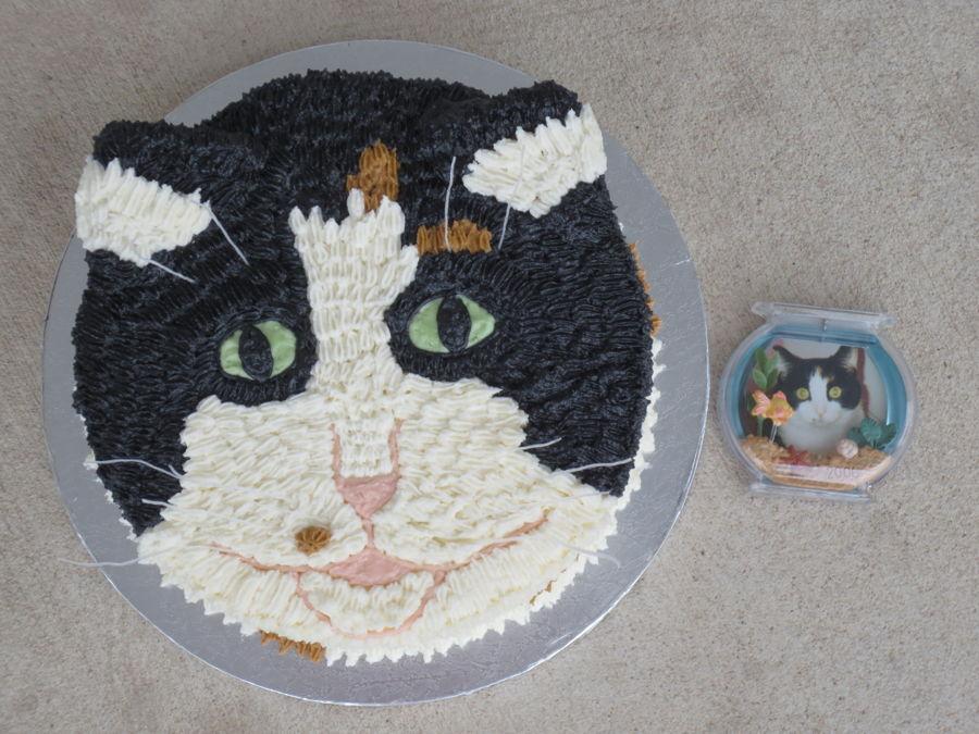 Calico Cat Cakecentral Com