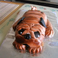 Mr. Pug My first carved cake. Alternating chocolate & orange layers with orange buttercream filling, crumb coat, & frosting. Covered with...