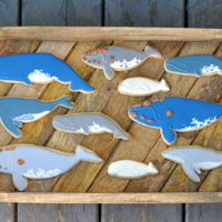 Whale Cookies Whale Shortbread Cookies decorated to look like different species of whales. Complete with barnacles!