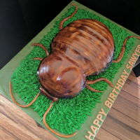 Madagascar Hissing Cockroach Who doesn't want a Madagascar Hissing Cockroach for their birthday cake??