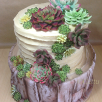Rock Rose Vanilla Cake Bottom dummy tier with the rice paper bark effect (tutorial found on cake central). Top tier buttercream and gum paste succulents.