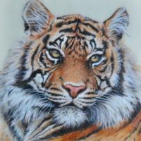 "Bengal Tiger My tiger is an 8"" x 10"" painting on fondant with powdered, edible colors mixed with vodka. He was my contribution to the..."