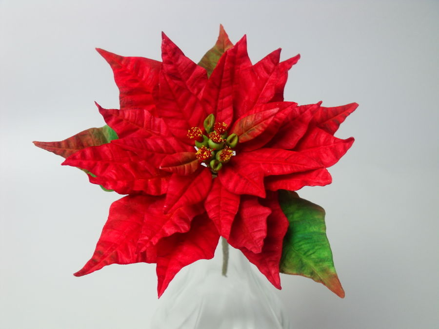 Red Poinsettia on Cake Central